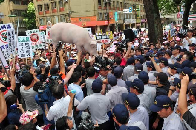 養豬戶們31日到立法院青島東路門口陳情抗議,憤怒的豬農們把用保麗龍做成的大豬送進立法院。(劉宗龍攝)