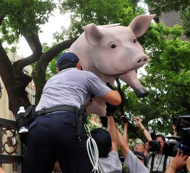 養豬戶們31日到立法院青島東路門口陳情抗議,憤怒的豬農們把用保麗龍做成的大豬送進立法院,警員小心翼翼地接下大豬。(劉宗龍攝)