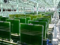 新時代「綠」能-藻類燃料
