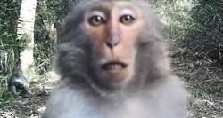 猴子搞自拍 人造林野生動物天堂