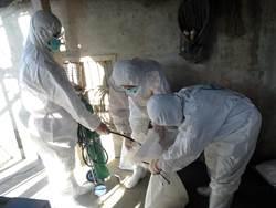 下營蛋雞場驗出禽流感 撲殺1萬多隻雞