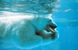動物抗暑大作戰 兩岸都靠剉冰