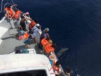 七星潭外海發現海豚遭魚槍射穿亡