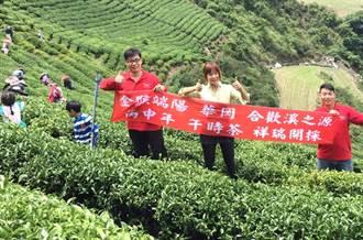 最高海拔華岡午時茶 每斤叫價2萬還搶購