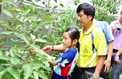 竹節蟲觀察網室啟用 港坪國小童樂觀察