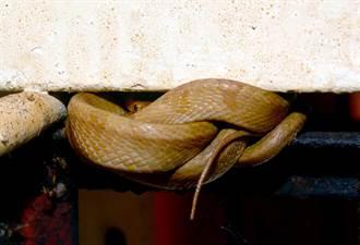 雙蛇顧廟左右護法 頭社水庫日滿宮譜神奇