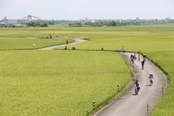 宜蘭伯朗大道架攝影高台 俯瞰稻田兼顧農民出入