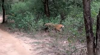 丛林中突然一阵骚动 民眾游保护区惊见「残忍杀戮」!