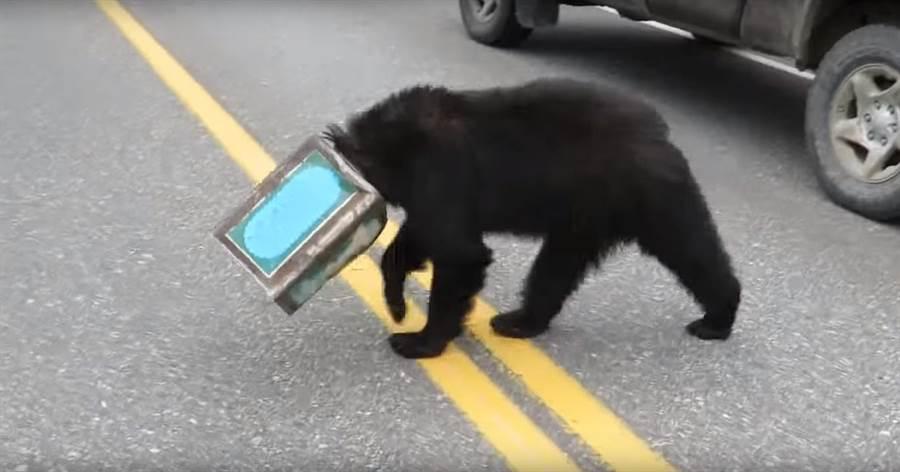 黑熊的頭被卡在鐵罐裡 路過駕駛紛紛下車想要幫忙(圖片取自youtube/ViralHog)