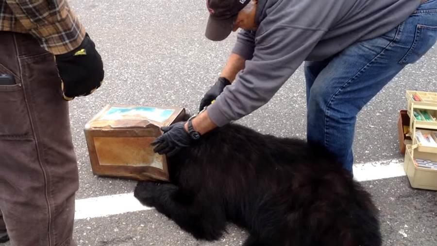 救援團隊迅速趕到 順利救出黑熊(圖片取自youtube/ViralHog)