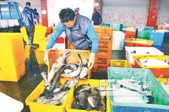 陸禁奢令 台石斑魚出口價量齊跌