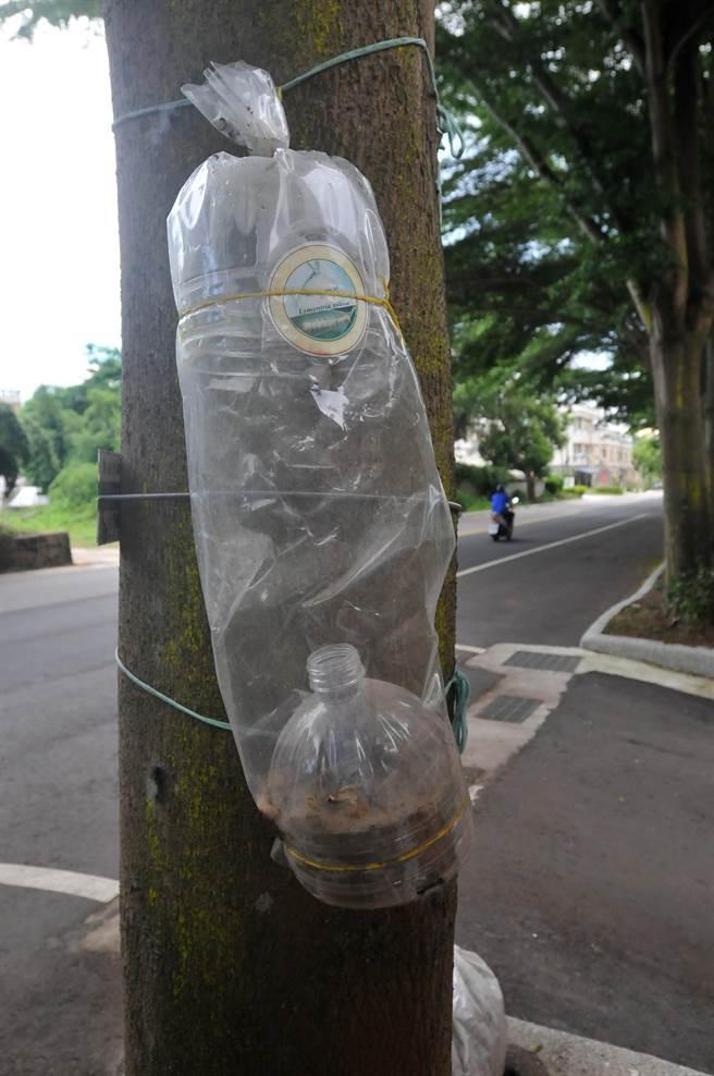金門縣林務所在全島放置214具誘蟲器,希望降低「黑角舞蛾」的族群數量。(李金生攝)
