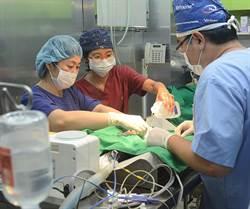 吞魚鉤幼犬動手術 38萬人關切