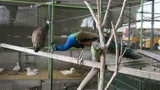 收養棄養寵物 員林清潔隊有百鳥園