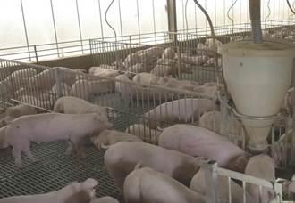 動物器官移植人類將非不可能