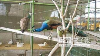 收養民眾棄養寵物 員林清潔隊成「百鳥園」