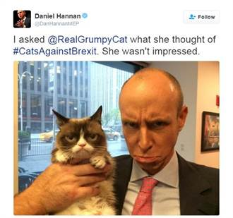 脫歐!? 貓咪表態洗版推特