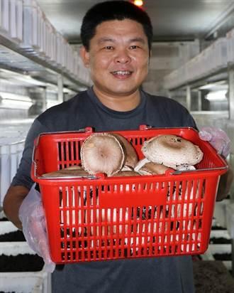 港東農民種巴西蘑菇 推廣新通路