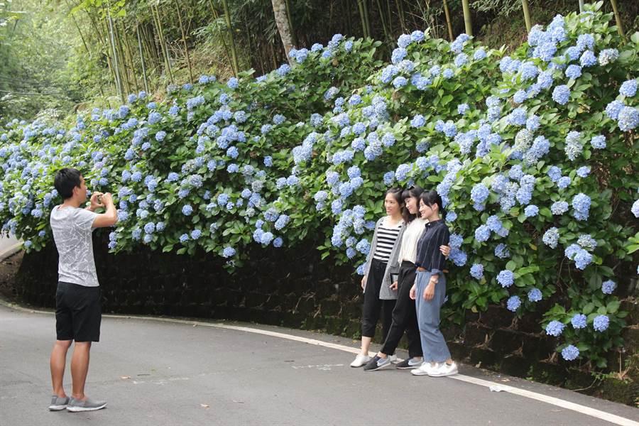 大批遊客慕名而來拍照。(黎薇攝)