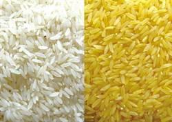基改糧食:黃金米的榮耀與無奈