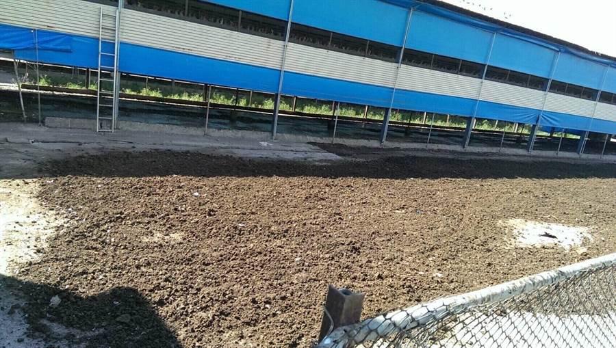 岡山1家養雞場露天曝曬雞糞,造成周邊臭氣沖天,高市環保局依《空汙法》開罰10萬元。(林宏聰翻攝)