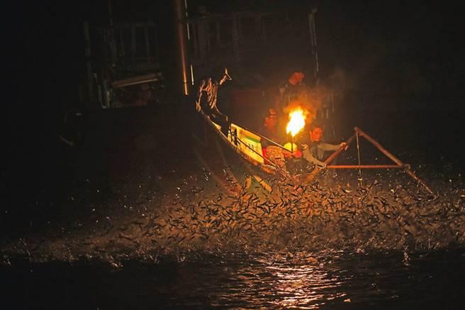 「蹦火仔」捕魚技法專門捕捉有趨光性的青鱗魚,在漆黑海水中,磺火照亮夜空,魚群在火光的牽引下跳躍,獨特耀眼的景象,令人震撼難忘。(Tibusungu Chen提供)中央社記者黃旭昇新北市傳真 105年7月2日