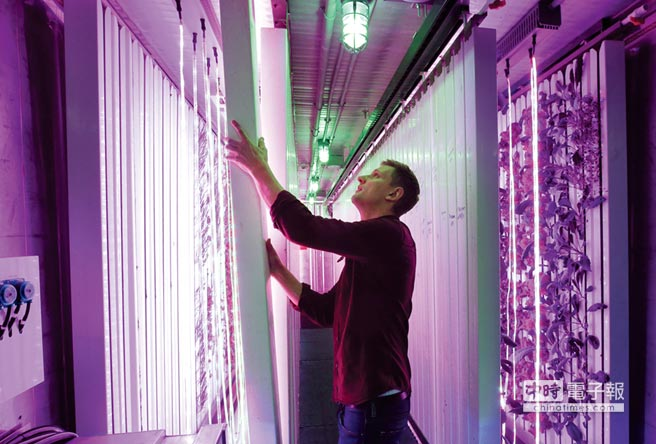 LED照亮貨櫃農場圖╱美聯社