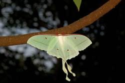 惠蓀林場生態豐富  蟲鳴鳥叫彩蝶飛舞