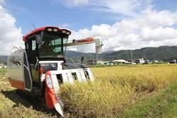 颱風攪局 宜蘭搶收稻作與防颱