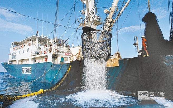 為化解我國遠洋漁業被歐盟抵制,立法院昨日三讀通過「遠洋漁業三法」。圖為遠洋圍網漁船捕撈鮪魚、鰹魚,大部分都製成「海底雞」罐頭,銷往歐美等國。(綠色和平提供)