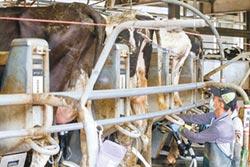 林鳳營牧場 乳牛五星級待遇