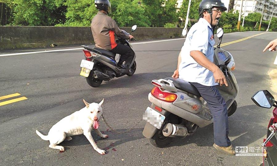 立法院修法明令禁止用汽車、機車遛動物。圖為男子在路上用機車強行拖狗。(本報資料照片)