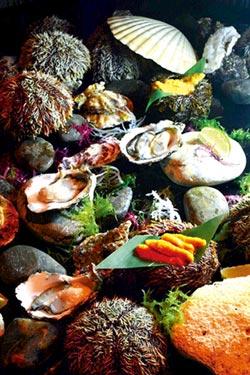 雲軒西餐廳 再推海膽生蠔吃到飽