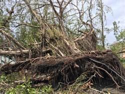 民間志工團重裝出發 搶救台東珍貴樹木