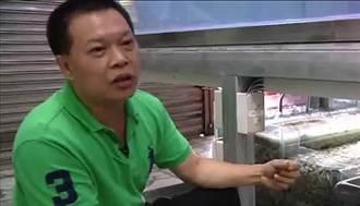 (影片)廢玻璃變黃金 環保輕石養千魟魚