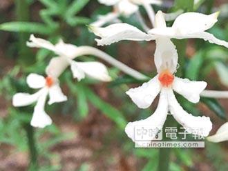 白色小紙人 白鶴蘭悠然在林間