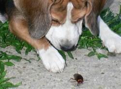 奇葩報案電話「兩隻蟑螂打架,警察快來幫我!」