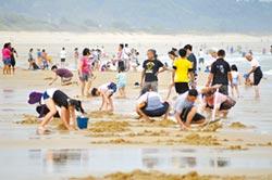 金門花蛤季 紅男綠女解放海灘