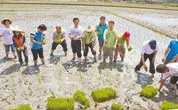花壇彩繪稻田 為三春老樹集氣
