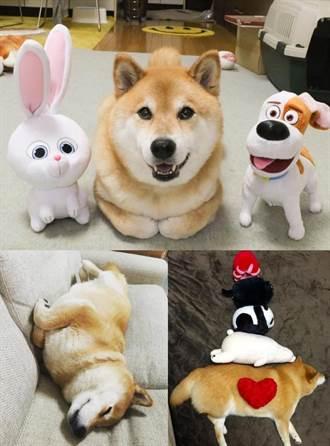 《寵物當家》看不夠?超夯明星狗狗陪你度過無聊的上班日!