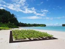 環境危機  水筆仔計畫籲正視吐瓦魯危機