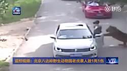 【影】逛野生動物園別下車 她們倆被老虎叼走咬死