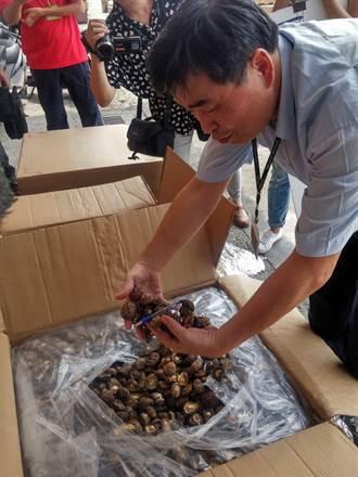 茶几夾藏香菇  走私6千公斤市值逾千萬