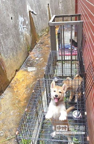 突擊非法繁殖場 救出17犬貓