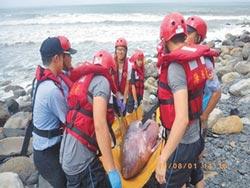 抹香鯨卡礁石 搶救不治