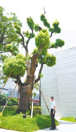 綠色革命 建商救下60年老樟樹