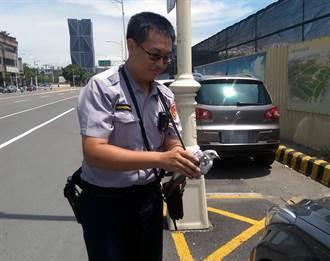 員警拾獲受傷鳥兒 送動保處照護