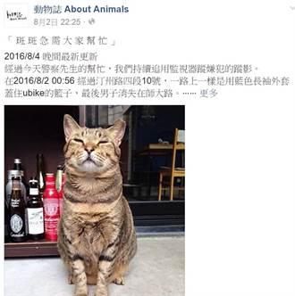 被影射偷貓  殺大橘子僑生:我人不在台北