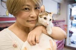 【寵物】雅風音樂貓咪中途咖啡廳 全力救助浪浪