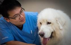 【寵物】愛心夫婦 並肩成為優秀獸醫